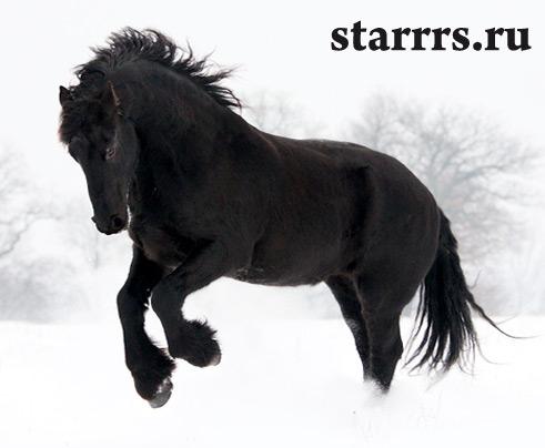 loshad_chyornaya_vodyanaya_horse_black_water