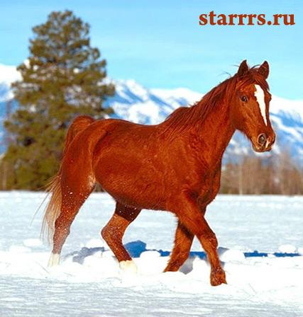 loshad_krasnaya_ognennaya_horse_red_fire