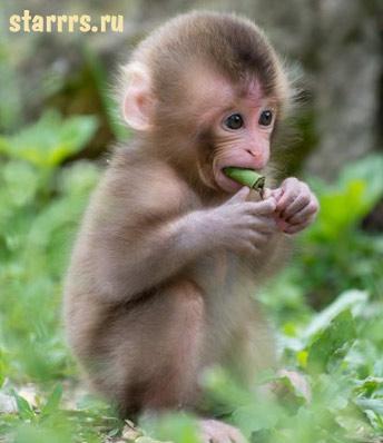 rebyonok_obezyana_child_monkey
