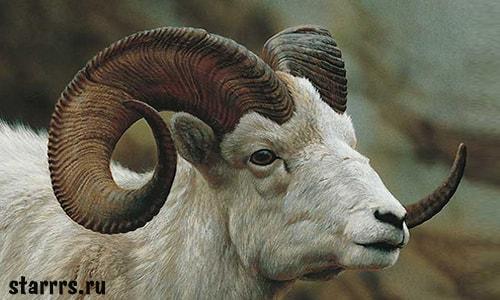 Баран, зороастрийский гороскоп