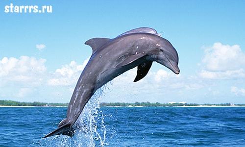 Дельфин, зороастрийский гороскоп